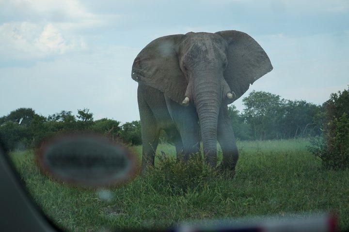 Elefant neben der Piste Chobe NP © badenduo.de