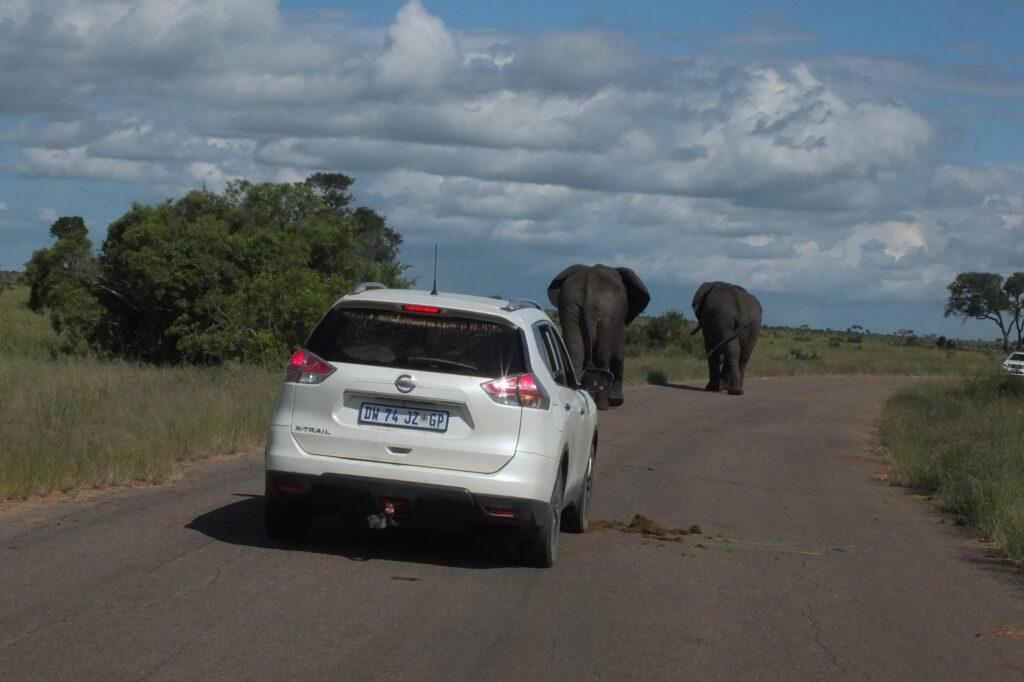 Elefanten auf der Strasse Kruger-NP / ZA © badenduo.de