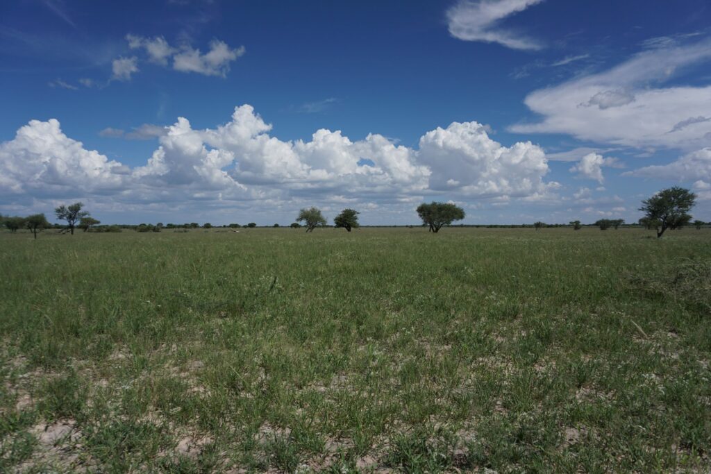 die Pans der Kalahari 17