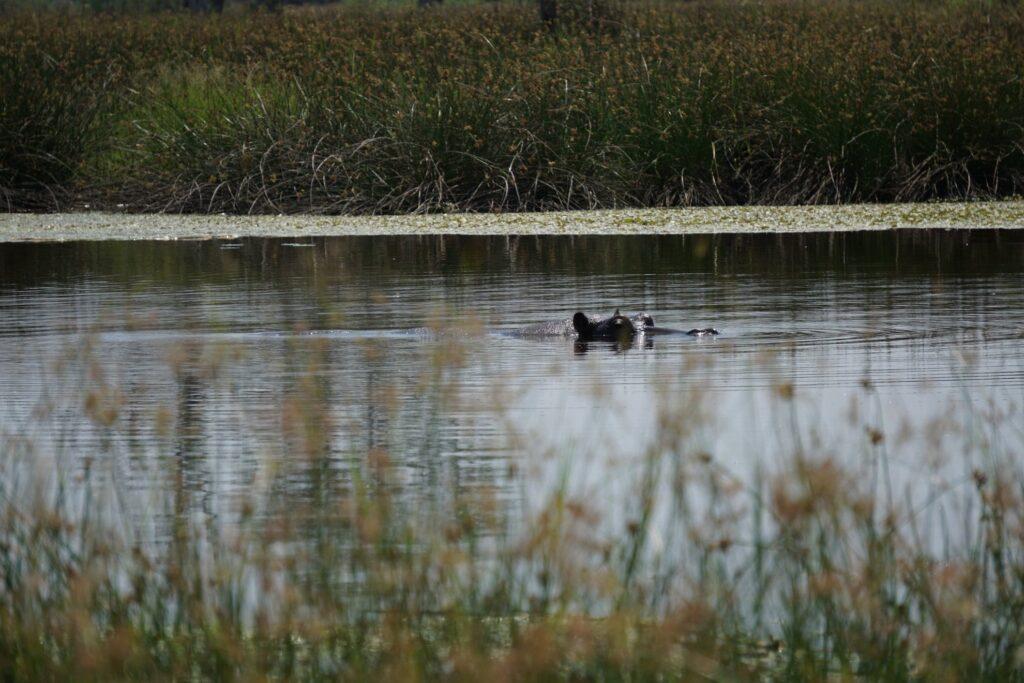 das Okavango 16