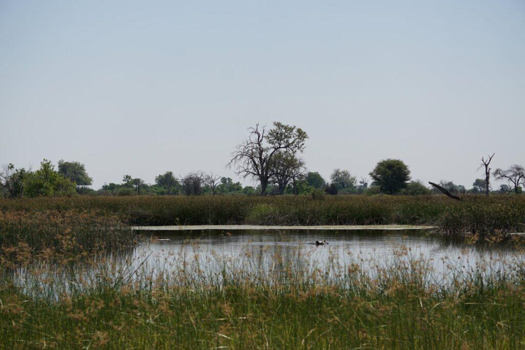 das Okavango 17