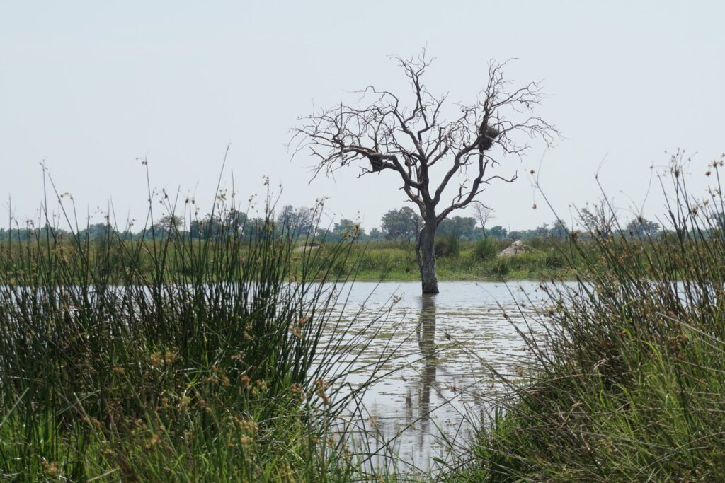das Okavango 18