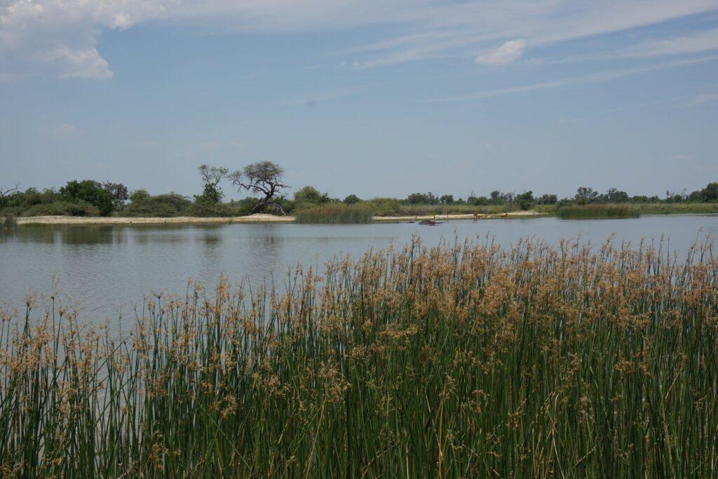 das Okavango 24