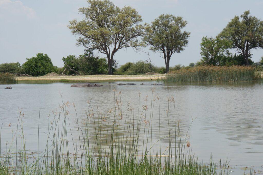 das Okavango 26