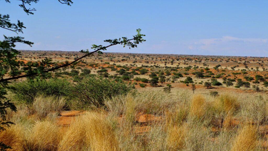 Red Dunes Camp Kalahari © badenduo.de