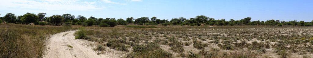 die Pans der Kalahari 2