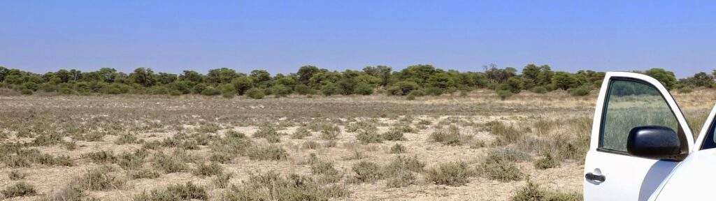 die Pans der Kalahari 4