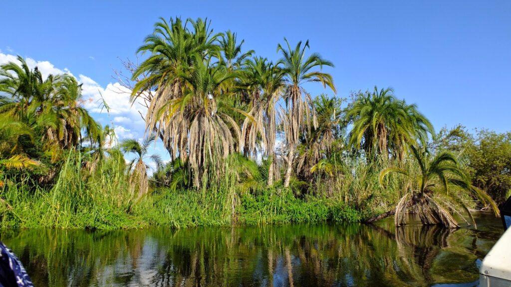 das Okavango 11