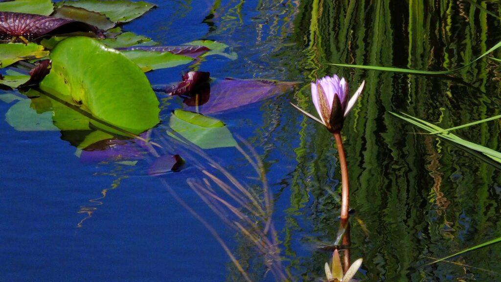 das Okavango 13