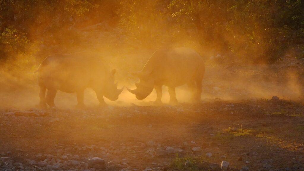 Nashörner im Khama Rhino Sancuary 4