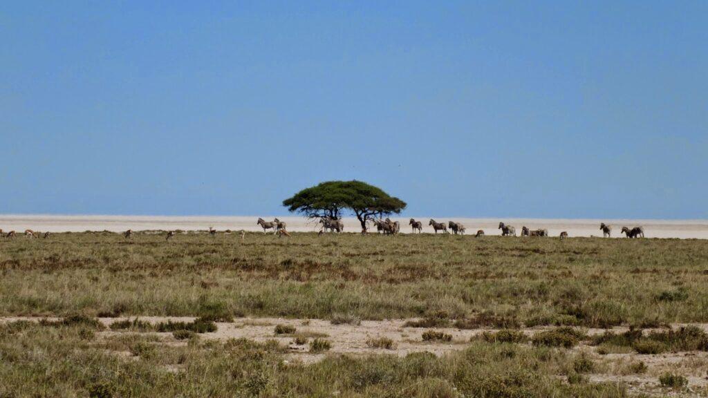 die Pans der Kalahari 11