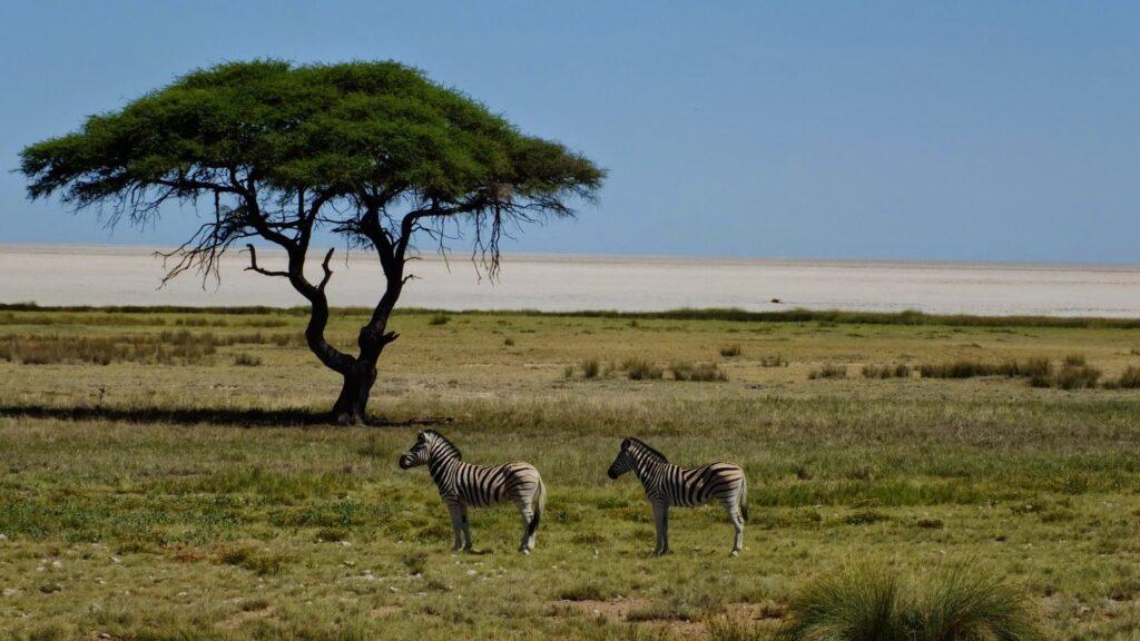 die Pans der Kalahari 1