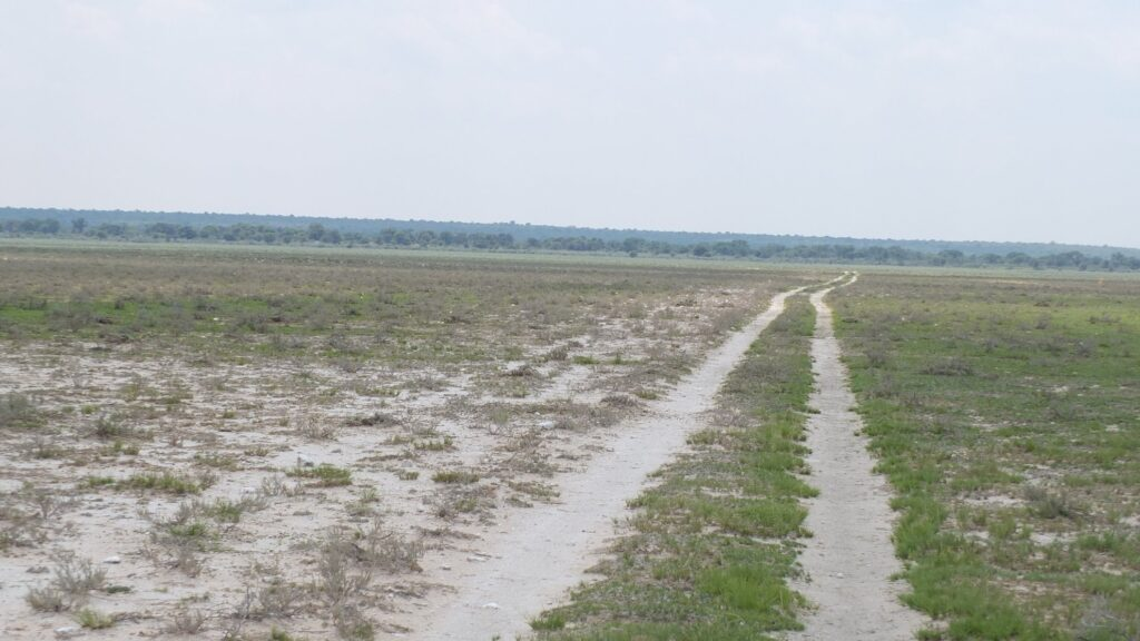 die Pans der Kalahari 10
