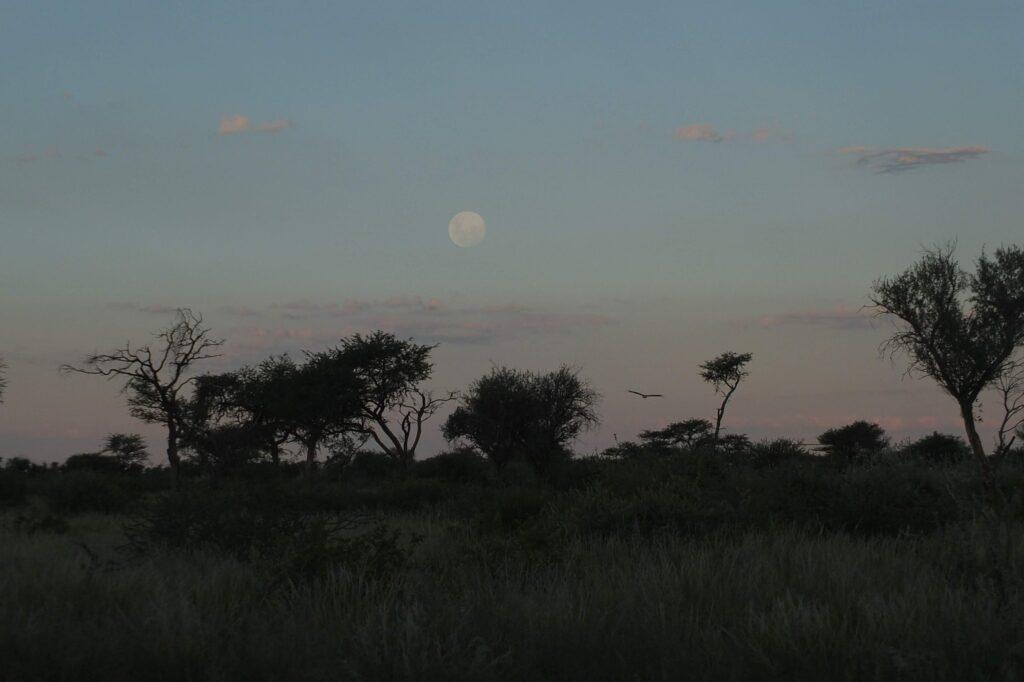 Mondaufgang Kalahari © badenduo.de