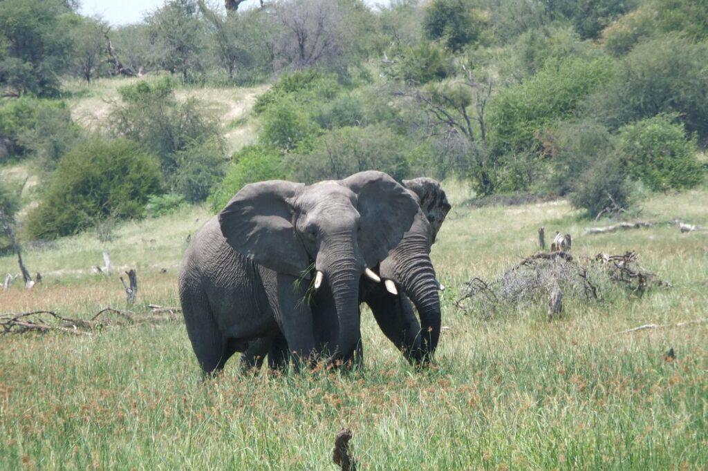 Elefanten 5