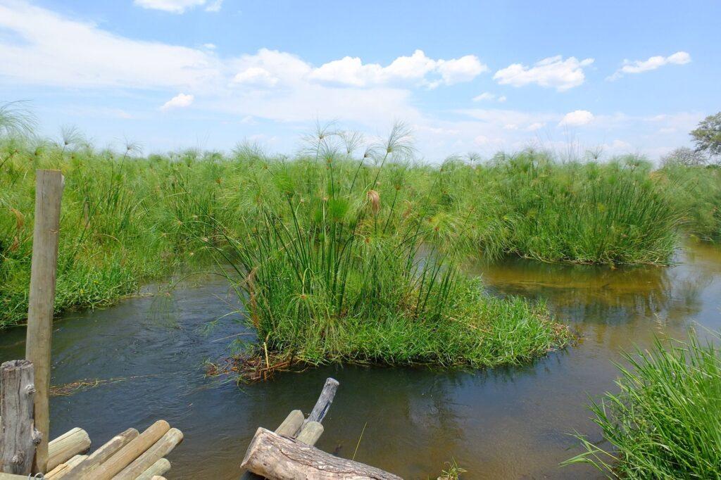 das Okavango 19