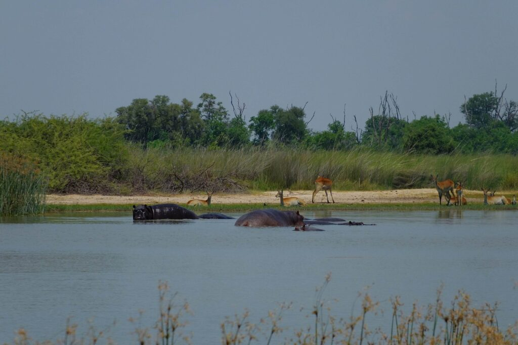 das Okavango 23
