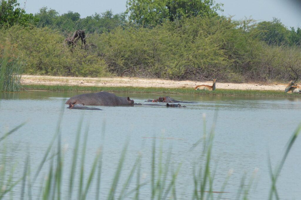das Okavango 25