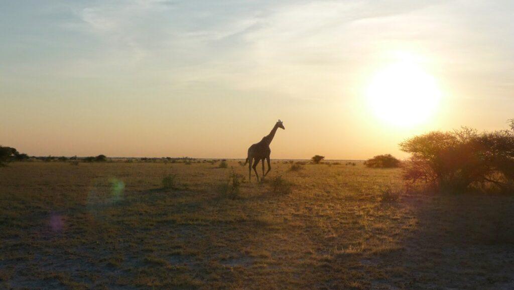 die Pans der Kalahari 9