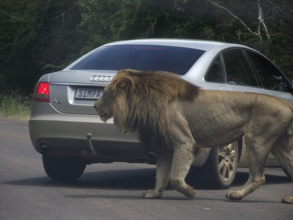 Löwen 26