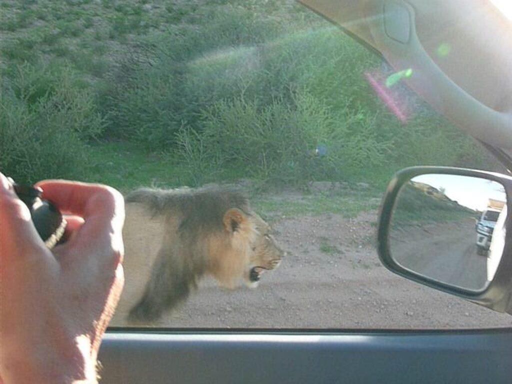 Löwen 22