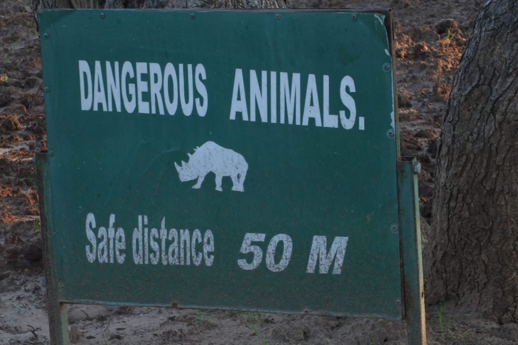 Nashörner im Khama Rhino Sancuary 1