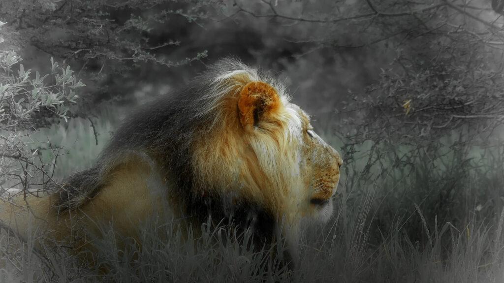 Chef des Kaa-Gate Löwenrudel